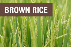 Brown Rice is one of three ingredients in Perfect Plant Protein