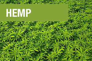 Hemp is one of three ingredients in Perfect Plant Protein