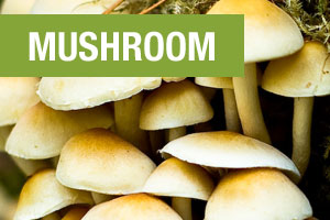 Mushroom is one of three ingredients in Perfect Plant Protein